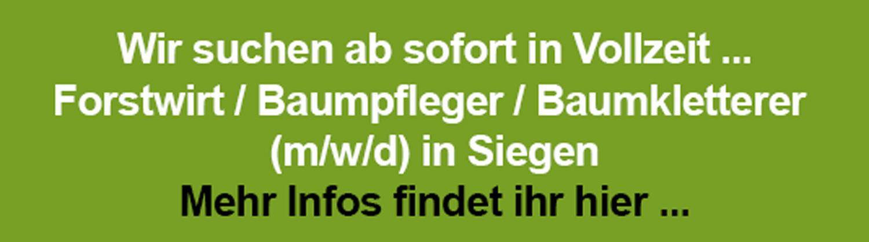Link zur Stellenausschreibung Forstwirt, Baumpfleger und Baumkletterer (m/w/d) in Siegen